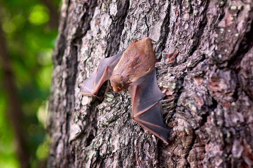Guided Bat Walk
